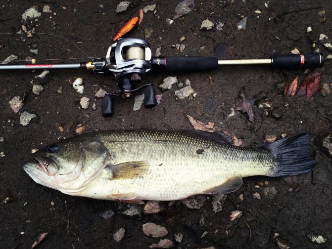 2015年もこんな魚釣りたいDEATH!!