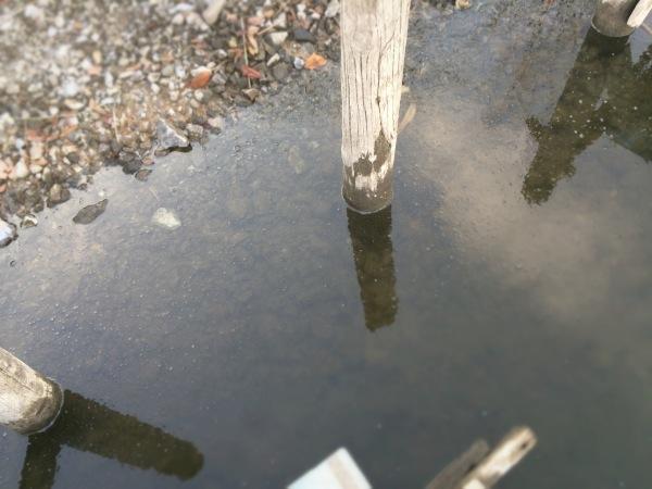 釣り人以上に魚にも厳しい冬なんだなぁ【2013/12/23釣行】