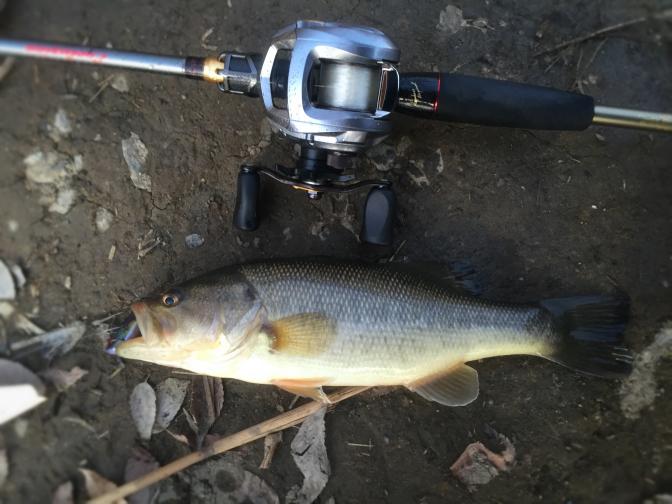 2014年12月14日釣行 日没直前にレベルバイブブーストで30cm弱!