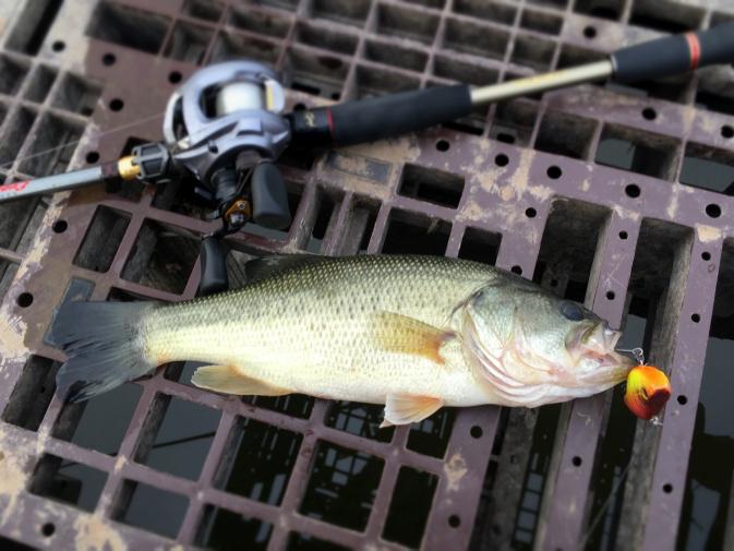 2015年10月11日釣行 ブザビで30cmちょい