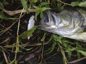 catch_20120901_02